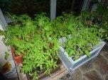 Pflanzenanzucht