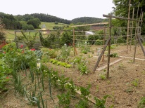 Gemüsegarten Ende Mai 2020