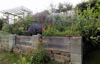 bio-gemuesegarten-220620_14