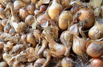 Schalotten - perfekt für Paradeiser-Salat