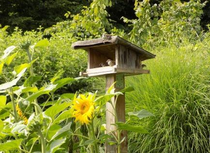 Gärtner/-innen begutachten ihre Sonnenblumen-Saat