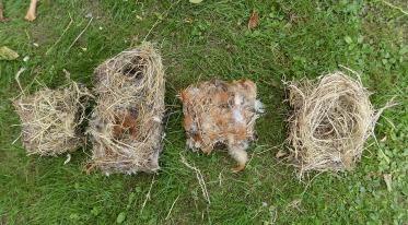 Vogelnester aus den Nistkästen