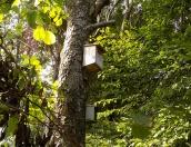 Nistkästen im Gartenwald