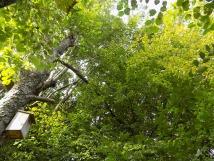 Hainbuchen und Eschen im Gartenwald