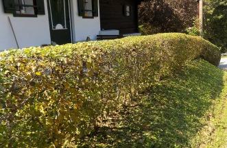 Heckenschnitt im Herbst