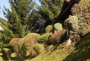 Strauchschnitt / Staudenschnitt / Heckenschnitt im Herbst