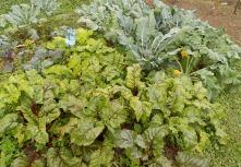 Ronen (Rote-Rüben) und Broccoli