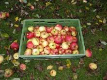 Speiseäpfel einlagern