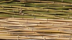 trocknende Bambusstangen aus meinem Garten