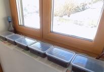 Mini-Gewächshäuser auf Fensterbank