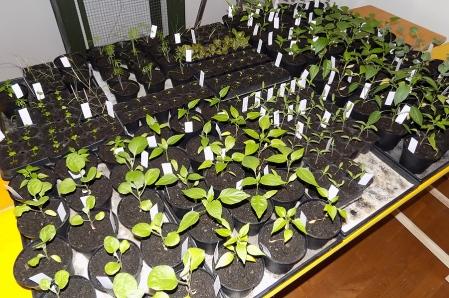 Pflanzenanzucht im Haus März 2021
