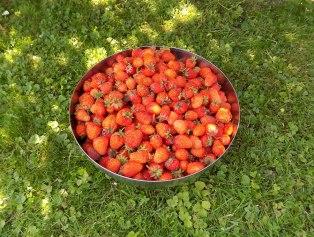 b is Anfang Juli gabs heuer Erdbeeren